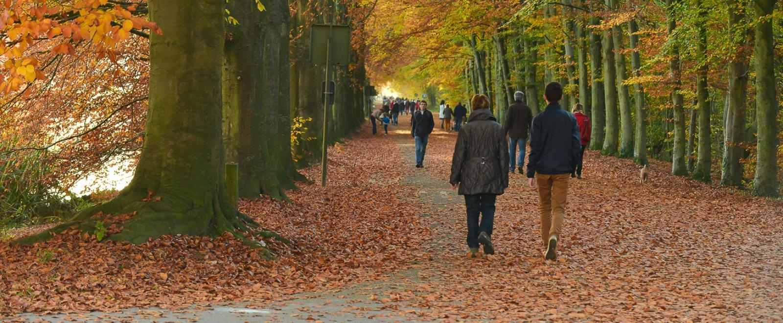 Walking in Tervuren