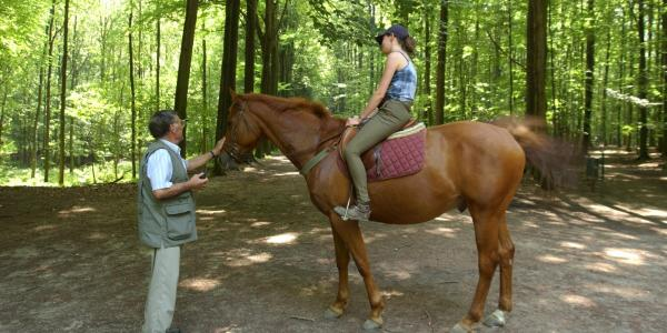 Horse riding in Tervuren